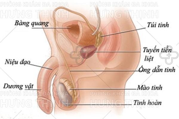 Viêm niệu đạo ở nam giới là gì, triệu chứng, cách chữa